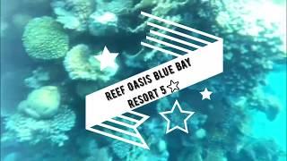 Reef Oasis Blue Bay Resort & Spa ⭐⭐⭐⭐⭐ Шарм-ель-Шейх , Египет. (p.2)