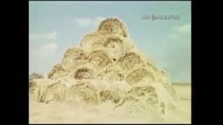1988 год. Начало сенокоса в Волгоградской области.
