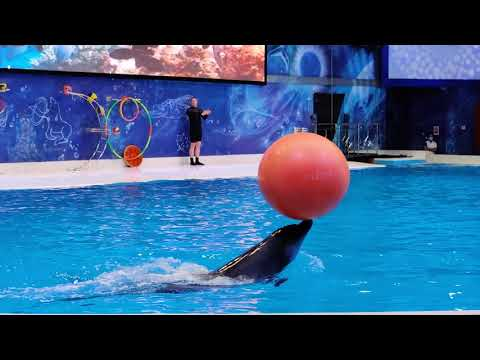 Dolphin Show at Dubai Dolphinarium