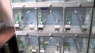Canary bird room update 2012