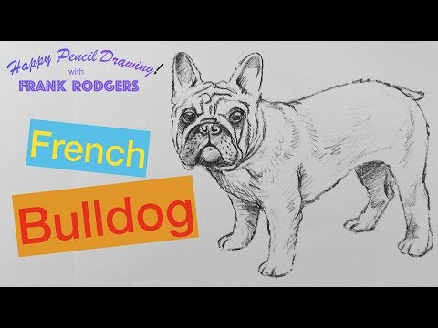 How To Draw A Pencil Sketch Of A French Bulldog - Happy Drawing! With Frank Rodgers