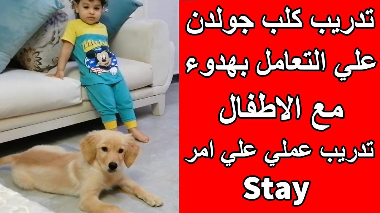 ازاي تدرب كلبك علي التعامل بهدوء مع الاطفال ومعاك فالبيت/ ازاي تدرب كلبك علي امر الثبات Order Stay