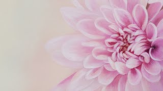 """Pink Floral"" Beginner Basics #4 Acrylic Painting LIVE Tutorial"