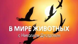 В мире животных с Николаем Дроздовым  Выпуск 1 (2018)