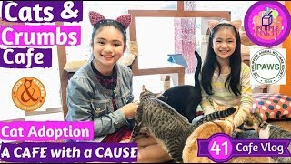 Cat Cafe | Cat and Crumbs Cafe and Cat Adoption | Cat Cafe for a Cause | Purple Pink TV