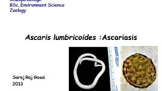 Tüdő parazita betegségei alveococcosis amebiasis ascariasis pneumocystosis. Páciens adatlap