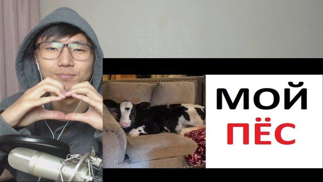 МАКС МАКСИМОВ и Лютые приколы! Почему моя собака мычит и дает молоко?