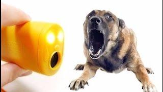 Хотите купить ультразвуковой отпугиватель собак? Как работает ультразвуковой отпугиватель собак