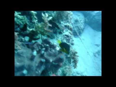 Plongée à la Martinique -Nord Caraïbe - Les Canyons de Babodi - 08/12/2008