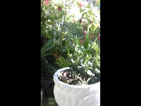 Plantas para la prosperidad feng shui magia wicca youtube - Feng shui para la prosperidad ...