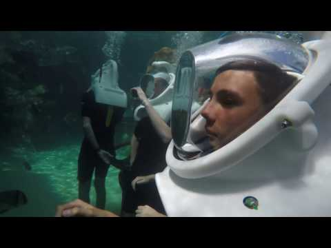 Seaventure Diving at Discovery Cove Orlando 4k