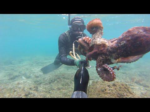 Podvodni ribolov - jesenski lov na hobotnice