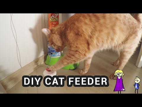 diy-arduino-cat-feeder-–-cat-pushes-button-to-get-food