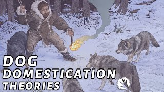 4 Dog Domestication Theories