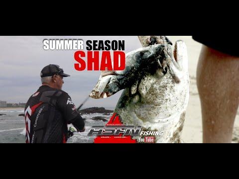 Summer Season Shad  -  ASFN Fishing Umtentweni & Mtunzini