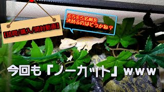 訪問先:ドン・キホーテ 購入商品:YAZAWA 電源タップ2種(10個口/6個口)...