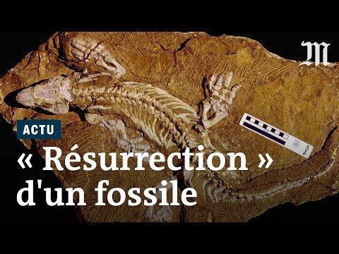 Un fossile « ressuscité » pour mieux étudier sa démarche