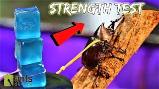 beetle-strength-test-the-rhino-beetle-games-round-two
