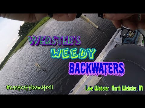 Websters WEEDY Backwaters (Lake Webster, IN)- Exploring Indiana Bass Fishing