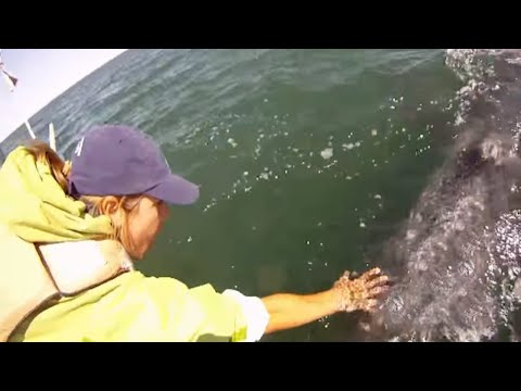 This Woman Reached Into The Ocean When Suddenly Everyone Lunged To Her Side Of The Boat..