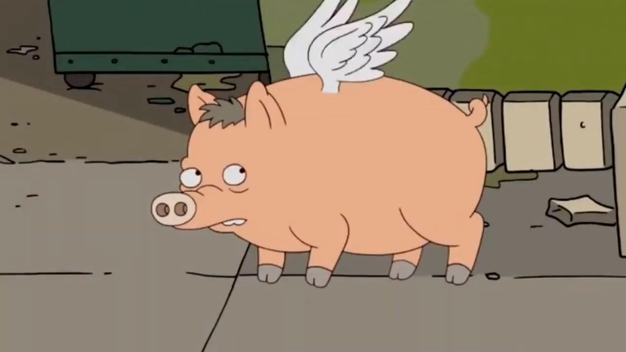 начала гифка жирная свинья подружки была