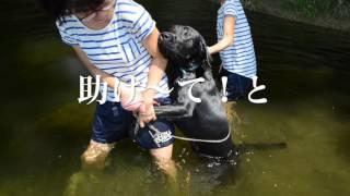 m32川で溺れそうになりしがみついて来るレオ thumbnail