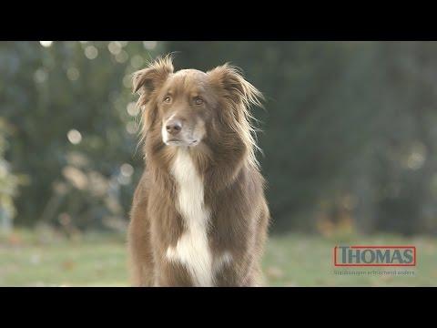 der-staubsauger-für-den-hundehaushalt-pet&family