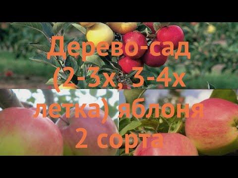 Яблоня обыкновенная Богатырь - Кандиль орловский 🌿 обзор: как сажать, саженцы яблони