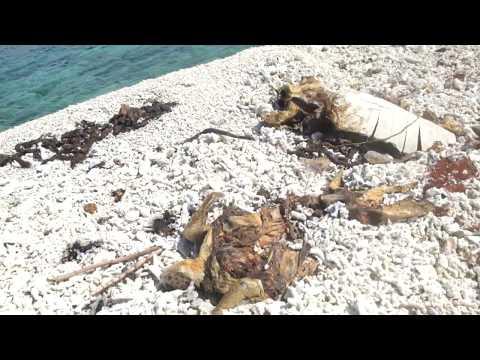 Southern Palawan Marine Environmental Issues IR/Documentation