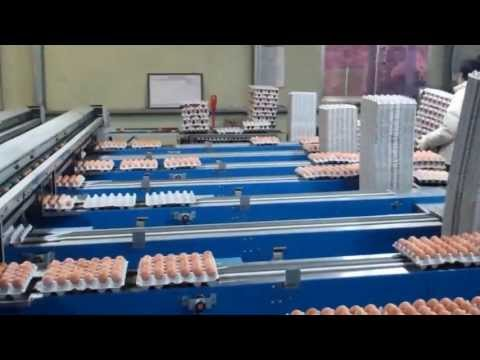 Chicken Egg Farm in Pocheon, Korea. (My mother's cousin owns this place)