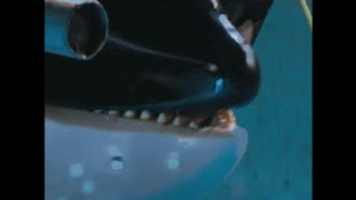 whale cry