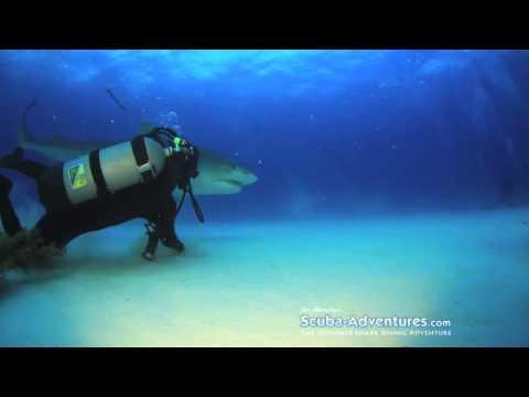 MAN PETS TIGER SHARK!