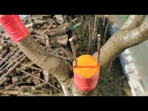 Altoirea pomilor -