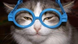 Кошки падают, внимание, падают кошки, ошибаются и падают!