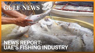 How UAE strengthens its fisheries