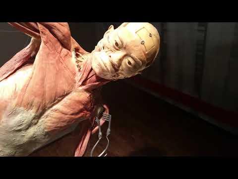 Human Bodies Exhibit - Las Vegas