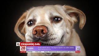 У США оприлюднили найпопулярніші прізвиська для собак(, 2016-12-28T11:57:40.000Z)