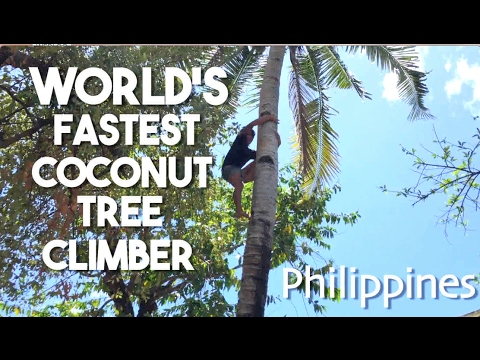 Worlds Fastest Coconut Tree Climber Philippines