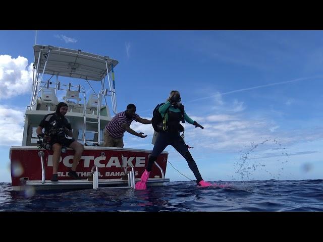 SharkLionfishFeed