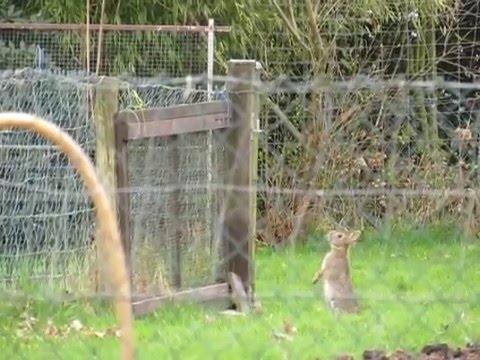 Hoe konijn Hummel  ontsnapt.