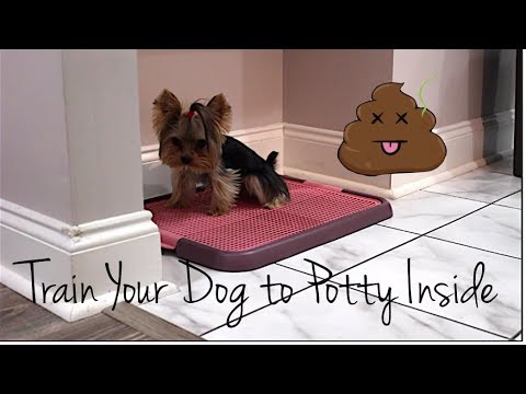 Potty Training Your Dog 101 | Indoor Potty Training | Part Two
