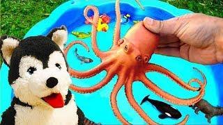 Дикие животные для детей и собачка Рекс - учимся играя с коробкой
