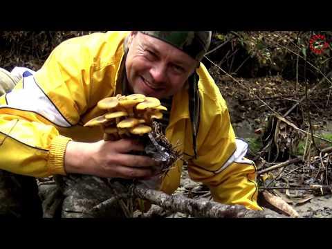 Грибные итоги, прошлое, будущее, и грибной сезон 18 - 19