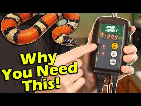How to Setup a Thermostat for Reptiles (and why you need one!)