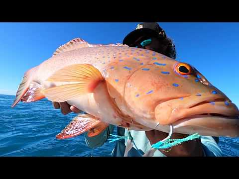 How To Catch Coral Trout Using SLOW PITCH JIGGING Techniques - Whitsunday Islands