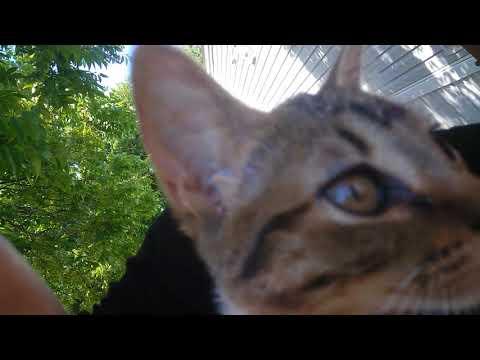 Missing kittens (I'm crying cuz I found them)
