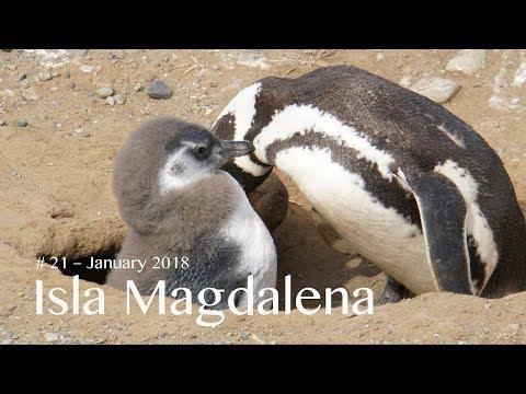 #21 – Isla Magdalena (4K)