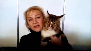 «DuftaPet» - средство для удаления запаха мочи от кошек