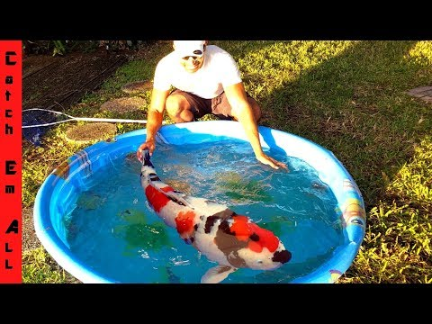 MEGA FISH EMERGENCY in Mini POOL POND! thumbnail