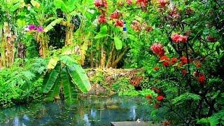 Природа Таиланда (лучшее видео)